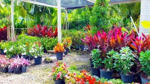 Rwanda's Floriculture leaps forward despite challenges