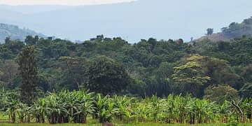 Ibanda-Makera is a 169-hectare natural forest of varied natural trees and home to types of wild animals, in a marshland connected to River Akagera.  Photo Courtesy.